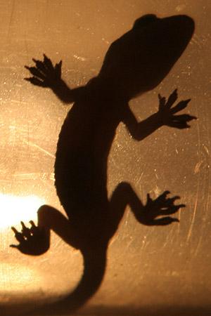 lizard-1.jpg